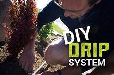 Natural Way To Get Rid Of Weed In Your System