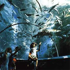 Sea World, San Diego, California