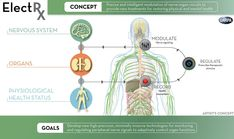 DARPAs ElectRx program = With precision-placed implants around the right nerve fibers, you could gain manual control of your organs — you could slow down or speed up your heart, turbo-charge your liver, or tweak just about any other function of your body. Transhumanism here we come.