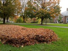 The leaf pile that Physical Plant created in front of Reed was just too good to resist
