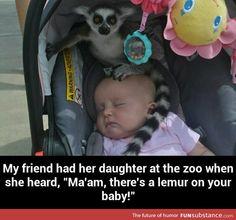 Lemur on your baby