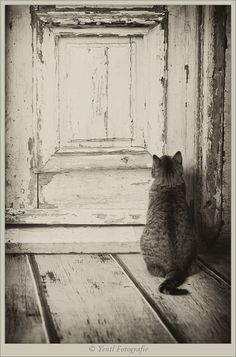 Photograph Let me in.... by Judith van der Graaf on 500px