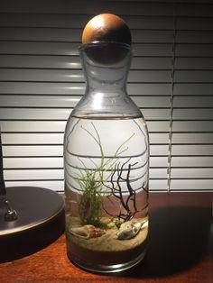 DIY Ecosystem Shrimp