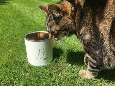 Your place to buy and sell all things handmade Cat Treats, Tin, Cats, Handmade, Tin Metal, Gatos, Hand Made, Craft, Kitty