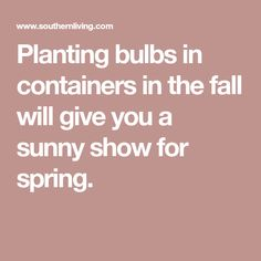 Planting bulbs in containers in the fall will give you a sunny show for spring.
