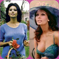 Divas, Hollywood Actor, Classic Hollywood, Sophia Loren Images, Italian Actress, Italian Beauty, Beauty Full Girl, Jolie Photo, Beautiful Actresses