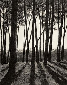 "April Gornik, ""Edge of the Forest"" 2002, Etching on paper"