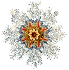 Ernst Haeckel | via opticalpleasure