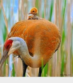 Funny pictures about 25 Of The Best Parenting Moments In The Animal Kingdom. Oh, and cool pics about 25 Of The Best Parenting Moments In The Animal Kingdom. Also, 25 Of The Best Parenting Moments In The Animal Kingdom photos. Pretty Birds, Beautiful Birds, Animals Beautiful, Stunningly Beautiful, Animals And Pets, Baby Animals, Cute Animals, Wild Animals, Animals And Their Babies