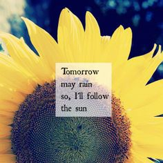 Sun quote. The Beatles. Sunflowers