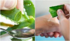 Aloe vera gel is a powerful ingredient that can work wonders for your face, skin and hair. Here's why you should use it and twenty ways to get you started.