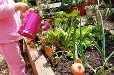 Preschool vegetable garden