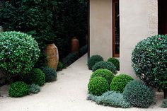 Softly shaped planting - garden design by Spirit Level Front Gardens, Formal Gardens, Outdoor Gardens, Modern Landscaping, Yard Landscaping, Low Maintenance Garden Design, Topiary Garden, Garden Paths, Garden Shrubs