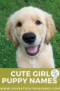 Hello pet lovers, dog lovers, dog owners and puppy owners. Are you a new pet owner? Did you just get a cute puppy or cute dog? Congrats! I created a list of unique dog names girl list. You are welcome to have my wonderful list of dog names girl unique list. This list is also for dog girl names for puppies. They are cut and unique puppy names female dogs.#puppy #puppynames #names #dognames #dog #doglove Fun Facts About Dogs, Puppy Teething, Teething Toys, New Puppy Checklist, Dog Pants, Best Baby Strollers, Puppy Supplies, Cute French Bulldog, Puppy Names
