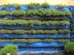 vertical wall garden supplies herbs for the Homegirl Cafe at Homeboy Industries, LA, California