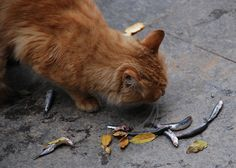 Istanbul Street Cat Gets Lucky by marmite_boy, via Flickr