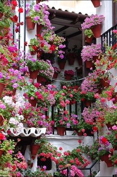 Courtyard garden in Cordoba, Spain. In early May, people proudly decorate their patios with flowers to compete for the city's 'most beautiful courtyard' contest. Jardin Decor, Cordoba Spain, Pot Jardin, Italian Garden, Window Boxes, Dream Garden, Garden Inspiration, Beautiful Gardens, Beautiful Life