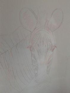 Lijn zebra