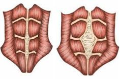 """Diastasis Recti: The More You Know.. I typically try to keep quiet in mom groups, ya know, pick my battles. However, when a question comes up about Diastasis, followed by a thread of women talking about how they have it (think they have it), that it's """"normal,"""" trying to diagnose/speculate, etc, I can't keep my damn mouth shut."""