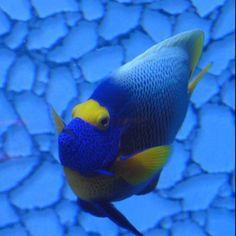love the underwater life!