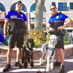 Bet you didn't know that the agility and smarts of a Poodle makes them terrific police dogs. Dog Love, Puppy Love, Boy Dog Names, Poodle Cuts, Pet Urine, Police Dogs, Therapy Dogs, Rottweiler, Best Dogs
