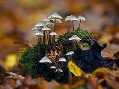Autumn Life by =GeorgeKirk1
