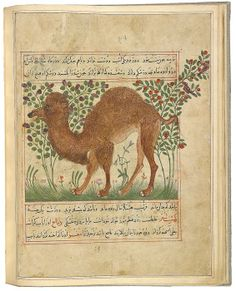 The Morgan Library & Museum Online Exhibitions - Treasures of Islamic Manuscript Painting from the Morgan - Camel