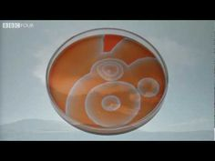 BBC The Secret Life of Chaos: inorganic self organization of patterns, Belousov-Zhabotinsky reaction, etc. (preview clip, the entire documentary is extraordinary!)