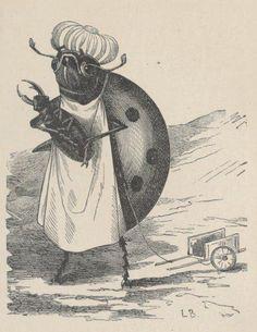 Le Monde des Insectes, E. Van Bruyssel. Illustrations,Becker. J. Hetzel, 1878