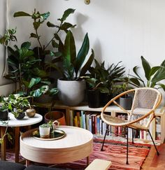 The dream indoor jungle situation. Getting there.  #indoorplants #jungle #decor #homeinspo #homestyle