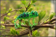 Mini Chameleon - insects crawling animals, reptiles, amphibians - Animals pearl forum