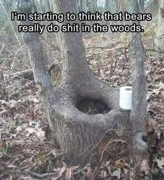 Im Starting To Think That Bears *ily Do Shit In Th. ~ Memes curates only the best funny online content. The Ultimate cure to boredom with a daily fix of haha, hehe and jaja's. Funny Pictures With Captions, Pictures Of The Week, Funny Photos, Walmart Pictures, Haha, Funny Troll, Funny Memes, Jokes, Family Humor
