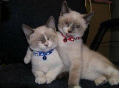 Коты любят не только людей :).