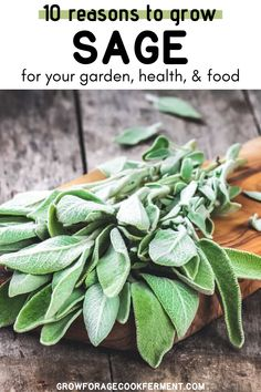 Here are 10 reasons why you should be growing sage in your garden this season for your health and for food! Sage is an awesome herb you should be growing for many reasons! Let's explore some of the many ways growing sage can be beneficial for your garden, your palate, and your health. Herb Garden Design, Lawn And Garden, Sage Garden, Farm Gardens, Outdoor Gardens, Gardening For Beginners, Gardening Tips, Sage Plant, Real Plants