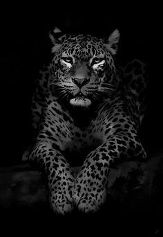 Feline © Kingwicked