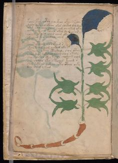 The herbal chapter shows unknown plants with text surrounding the drawings.