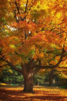Autumn colors ~ 2014♥ ༻✿ڿڰۣ ♥ NYrockphotogirl ♥༻
