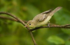 Zaganiacz Bird Watching, Birds, Pictures, Animals, Photos, Animales, Animaux, Bird, Animais