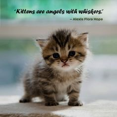 #catquotes #catquote #cat #cats #catlover #catlovers #catlove #catlife #catloversclub #catslover #crueltyfreeblogusa Vegan Hot Cross Buns, Cat Love Quotes, Mother Cat, Lion Cub, Drop Cookies, Chocolate Chip Recipes, Therapy Dogs, Free Blog, Cat Life