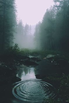 His cold thumb slowly went to my mouth, I fully sucked it while my ey… #fanfiction #Fanfiction #amreading #books #wattpad Dark Green Aesthetic, Nature Aesthetic, Aesthetic Colors, Gothic Aesthetic, Forest Photography, Travel Photography, Underwater Photography, White Photography, Animal Photography