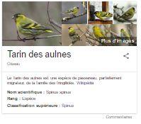 Tarin Des Aulnes, Kitchens