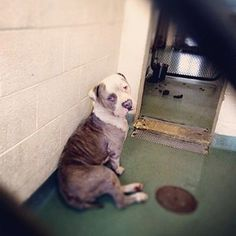 The defeated face of a dog dumped twice at the same animal control