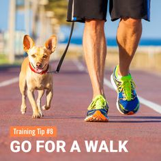 #8TrainingTip - GO FOR A WALK Pets need exercise every day. For dogs, walks provide not only exercise but they are crucial for continued socialization to people, new environments, and other pets. This is a time for you to bond with your dog and have fun. Practice exercises during your walk where your dog focuses on you as if you're playing games. The goal is that the walk becomes like an enjoyable conversation. #davie #allpetsemporium #dogtraining