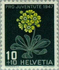 Znaczek: Auricula/Mountain Cowslip (Primula auricula) (Szwajcaria) (Pro Juventute: Alpine flowers, Jacob Burckhardt) Mi:CH 489,Sn:CH B167,Yt:CH 446,AFA:CH 492,Zum:CH J122