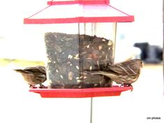 birds on feeder at house  one coming in