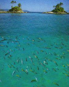 Snorkling the Angra dos Reis Islands.
