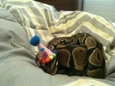 Aww, a sleepy clown. | 11 Snakes That Look Totally Adorable In Their Halloween Costumes
