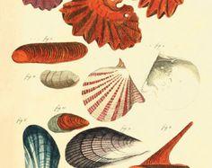 Mar cáscara arte impresión grabados antiguos arte náutico impresión decoración océano playa Océano impresión impresión mar arte impresión viejo impresiones artísticas Inicio arte de pared de la decoración