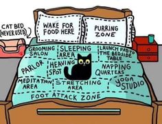 Funny cat map of the bed for cat lovers and owners. Amazing detail of how cats perceive us as they own pet and think they own us. Cute Funny Animals, Funny Animal Pictures, Funny Cute, Cute Cats, Funny Kitties, Funny Cats And Dogs, I Love Cats, Crazy Cats, Crazy Cat Lady