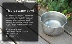 Be a hero; keep a bowl filled with water. Crazy Cat Lady, Crazy Cats, This Is Water, All About Animals, Save Animals, Animal Welfare, Akita, Pet Health, Pet Care